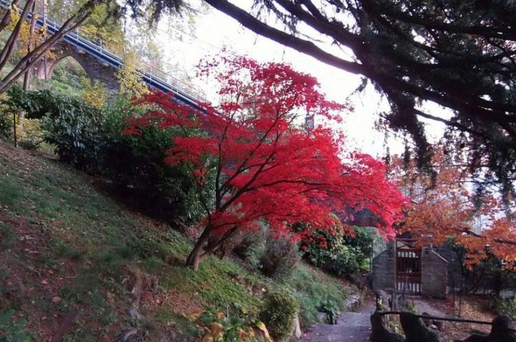il giardino in autunno