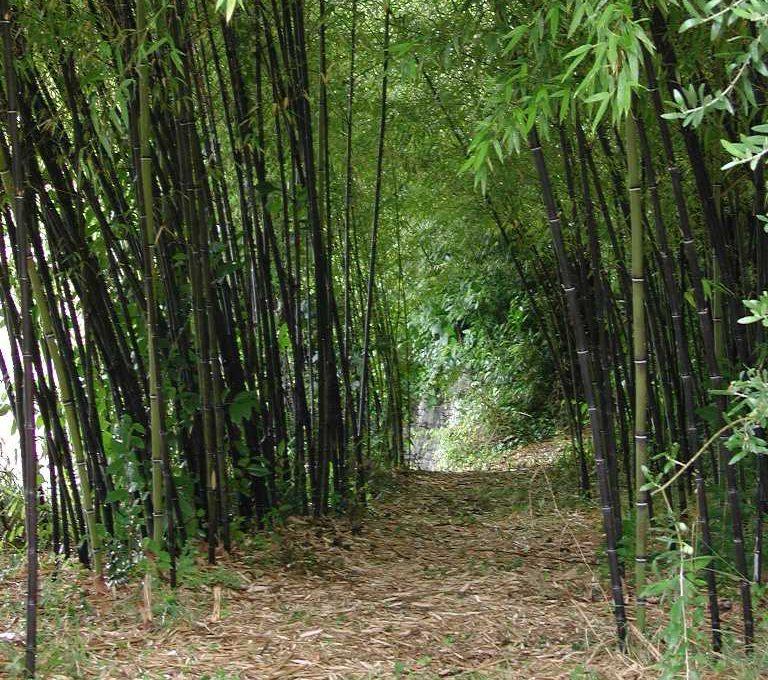 il parco: bambu'