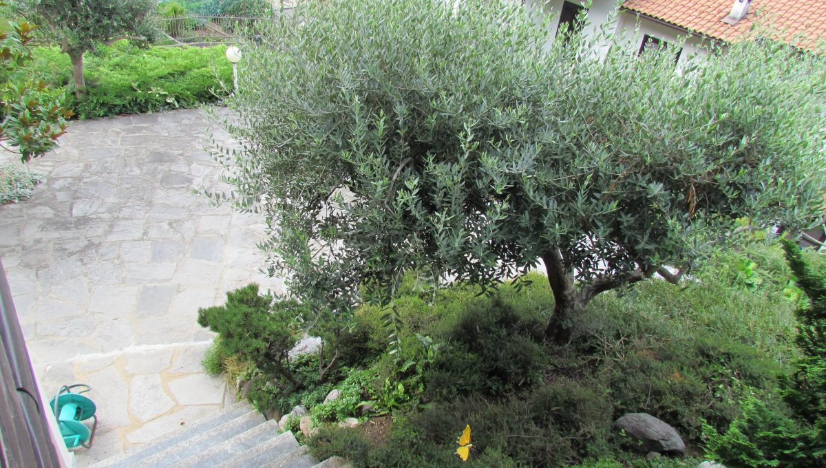 giardino piantumato